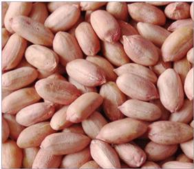sudanese_ground_nuts
