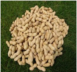 sudanese_ground_nuts_jpg